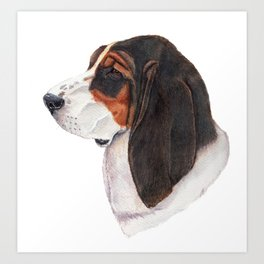 Basset hound - color Art Print
