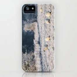 Sheep grazing a frost covered field. Norfolk, UK. iPhone Case