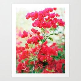 Red Bougainvillea - Ibiza - Travel Photography Art Print