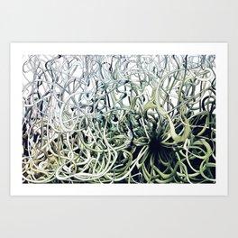 Dis Green Art Print