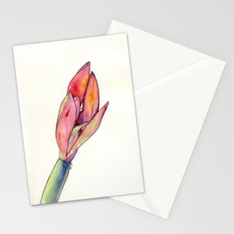 Amaryllis Flower in Watercolors Stationery Cards