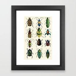 Jeweled Beetles  Framed Art Print