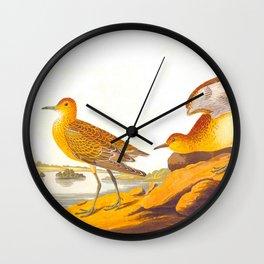 Buff-breasted Sandpiper Bird Wall Clock