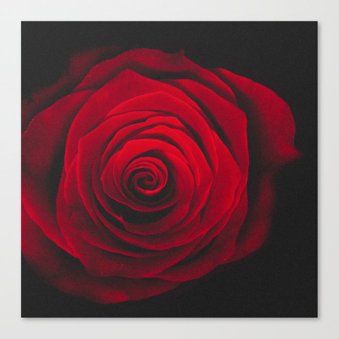 Red rose on black background vintage effect Canvas Print