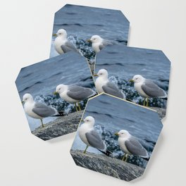 Seagulls, Norway Coaster