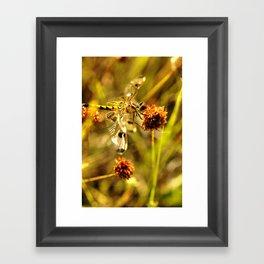 Black-tailed Skimmer Dragonfly Framed Art Print