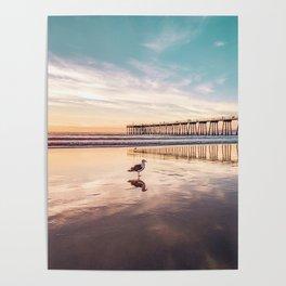 Marion's Gull Poster
