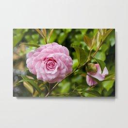 Camellia Metal Print