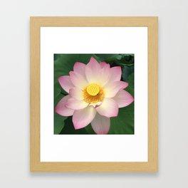 Awesome Lotus Blossom Framed Art Print
