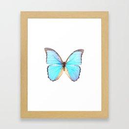 Morpho DiDius Butterfly Framed Art Print