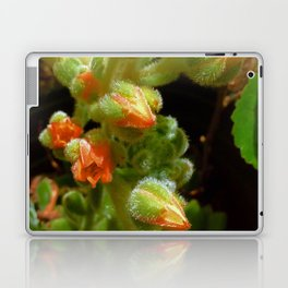 Fuzzy succulent flowers Laptop & iPad Skin