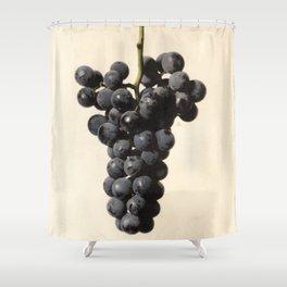 Vintage Concord Grapes Illustration Shower Curtain