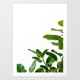 Ficus Plants Art Print