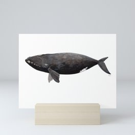 Northern right whale (Eubalaena glacialis) Mini Art Print
