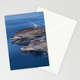 Beautiful Spotted dolphins Stenella frontalis Stationery Cards