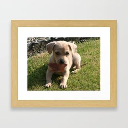 A Present For You Framed Art Print
