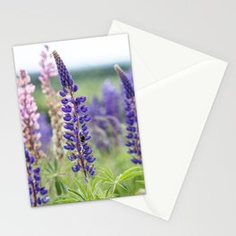 Colorful lupines Stationery Cards