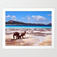 Kangaroos on White Sand Beach, Australia (P2098514) Art Print