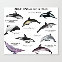 Dolphins of the World Canvas Print