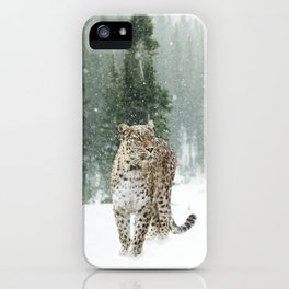 Persian leopard iPhone Case