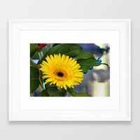 you are my sunshine Framed Art Prints featuring Sunshine  by IowaShots