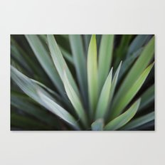 Yucca #6 Canvas Print