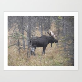 Moose on the Murray Art Print
