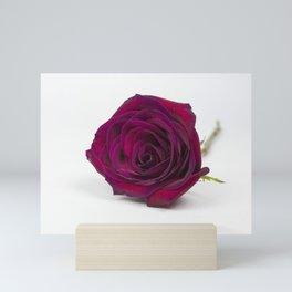 Red Red Rose Mini Art Print