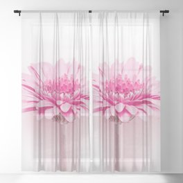 Pink gerbera Sheer Curtain