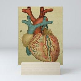 Anatomical Heart Mini Art Print