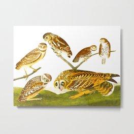 Burrowing Owl John James Audubon Scientific Bird Illustration Metal Print