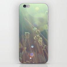 grass dreams iPhone & iPod Skin