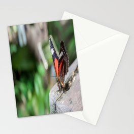 Red Lacewing Butterfly Stationery Cards