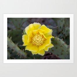 Yellow Cactus Flower 2 Art Print