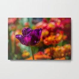 Magenta Tulip 1 Metal Print