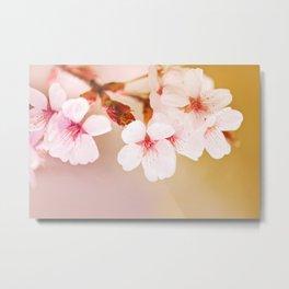 Blooming fairy cherry tree Metal Print