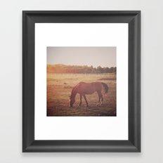 Horse (#7) Framed Art Print