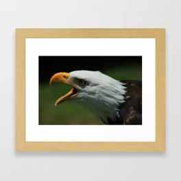 Bald Eagle Chirping Framed Art Print