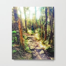Zealand Forest Metal Print