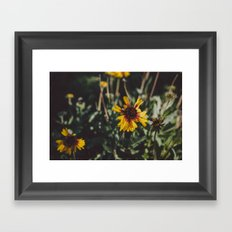 Autumn Daisies Framed Art Print