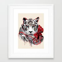 tiger Framed Art Prints featuring White Tiger by Felicia Cirstea