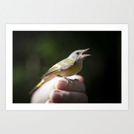 Gold Finch 2 Art Print