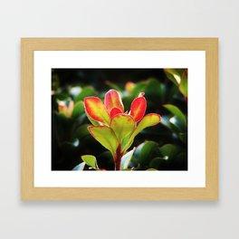 Hedge flower Framed Art Print