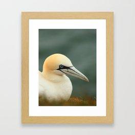 Gannet Portrait Framed Art Print