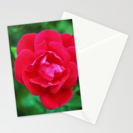 Pink Fall Rose Stationery Cards