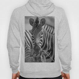 Zebra with grass, Africa wildlife Hoody