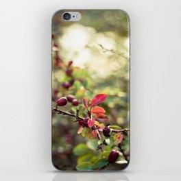 Autumn Glow I iPhone Skin