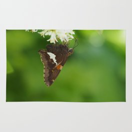 Feasting Butterfly Rug