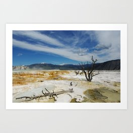 Dry trees on Mammoth Terraces, Yellowstone Art Print