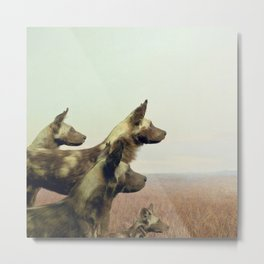 Hi, we are the wild dogs Metal Print